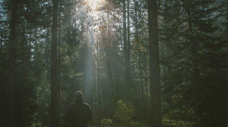 Innere Ruhe im Wald