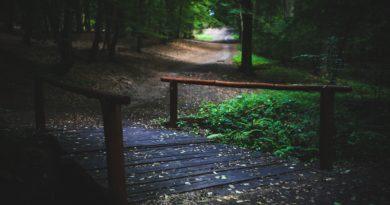 Waldweg auf dem man Entspannen kann