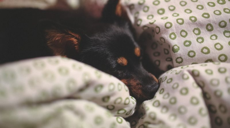 Viele leiden unter Schlafstörungen